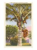 Kokosová palma Umělecké plakáty