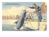 Feeding Porpoise, Marineland, Florida Poster