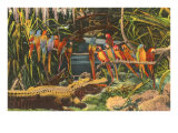 Macaws and Alligator, Florida Posters