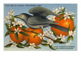 Mockingbird, Orange Blossoms, Florida Poster