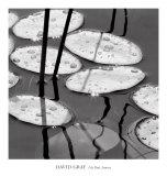 Lily Pads, Sunrise Kunstdrucke von David Gray