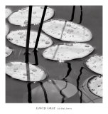 Lily Pads, Sunrise Prints by David Gray