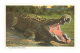 Florida Man-Eater, Alligator Posters