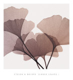 Ginkgo Leaves I Posters by Steven N. Meyers