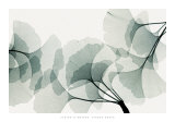Ginkgo Dance Prints by Steven N. Meyers