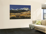 Autumnal View of Aspen Trees and the Rocky Mountains, San Juan National Park, Colorado, USA Wall Mural