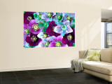 Heliborus Pattern of Winter Blooming Flower, Sammamish, Washington, USA Reproduction murale géante
