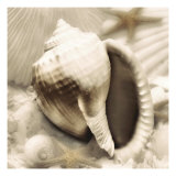 Iridescent Seashell III Giclee Print by Donna Geissler
