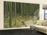 Bamboo Trees on Both Sides of a Path, Kyoto, Japan Fototapete – groß