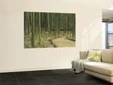 Bamboo Trees on Both Sides of a Path, Kyoto, Japan Wall Mural