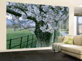 Cherry Trees and Path, Killaney, Ireland Wall Mural – Large