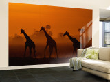 Giraffes Silhouetted at Twilight Vægplakat, stor af Beverly Joubert