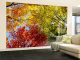 Colorful Trees in Fall, Autumn, Low Angle View Wall Mural – Large
