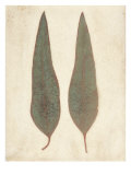 Two Leaves Premium Giclee Print by Amy Melious