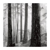 Capilano Forest Prints by  Lsh