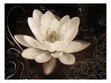 Garden Journal IV Giclee-tryk i høj kvalitet af Amy Melious