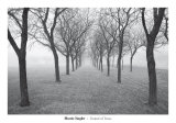 Tunnel of Trees Print by Monte Nagler