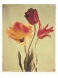 Spring Color III Premium gicléedruk van Amy Melious