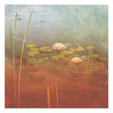Pond Lilies II Premium Giclee Print by Amy Melious