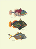 Tropical Fish Prints by Georges Cuvier