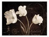 Garden Love Letter II Reproduction procédé giclée par Amy Melious