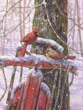 Red Sled with Cardinals Affiches par Donna Race