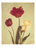 Spring Color IV Premium gicléedruk van Amy Melious