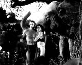 Tarzan the Ape Man Photo