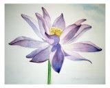 Purple Lotus Flower Giclee Print by Jennifer Shinomoto
