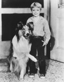 Jon Provost Photo