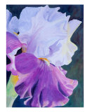Portrait Of An Iris Blossum Giclee Print by Teddie Mcconnell