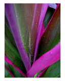 Pink And Green Ti 1 Photographic Print by Doreen Decasa