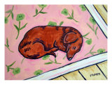 Dachshund Sleeping On A Carpet Giclee Print by Jay Schmetz