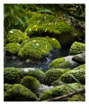 Green Stream Photographic Print by Alexander Efimov