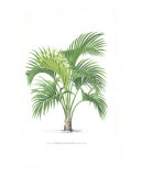 Palm Tree Illustration Collection Giclee Print by Olivier Baelde