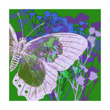 Butterfly Frenzey Giclee Print by Ricki Mountain