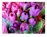 Tulip Yawn Photographic Print by Florene Welebny