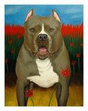 Poodle Dave, Pit Bull Giclee Print by Carol Lynn Nesbitt