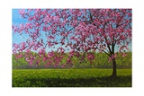 Pink Blossoms IX Giclee Print by Patty Baker