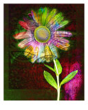 Far Out Daisy Photographic Print by Susan Van Selous