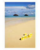 Plumerias On The Sand Photographic Print by Tomas del Amo