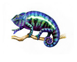 Colorful Chameleon Giclee Print by Carolyn Mcfann