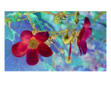 Red And Blue Photographic Print by Robert Burns