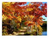 Fall Colors At Lake Taconic, Upstate Ny Photographic Print by Doug Rosenberg