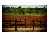 Field Of Poppy From Hcc 8 Of 10 Photographic Print by Heather Croxton
