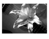 Guitar And Lilly Black And White Photographic Print by Michael Cox