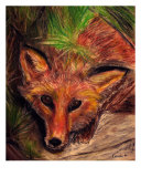 Curious Fox Giclee Print by Michael Forzato