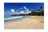 Palms Fringed Beach, Luquillo, Puerto Rico Photographic Print by George Oze