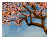 Cherry Tree Giclee Print by Mary Hining