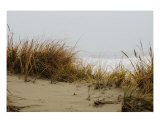 Sand Dunes Photographic Print by Michael W Miller